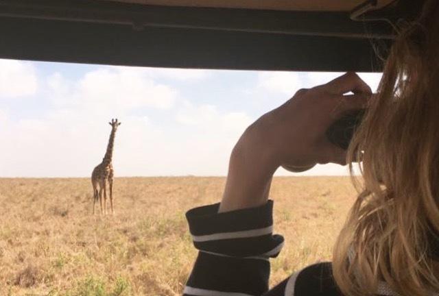 2 giraffer