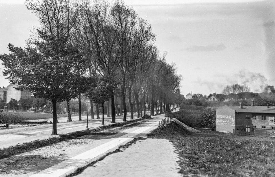 Vejforløb med vejtræer på den ene side og huse på den anden